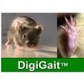 DigiGaitTM啮齿动物步态分析系统