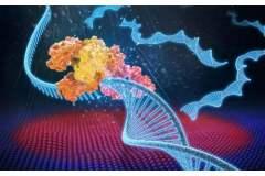 2016年中国PCR基因扩增仪市场现状及发展趋势分析