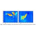 VISIR动物行为观测分析系统