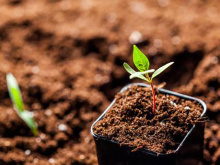 土壤、底质和生活垃圾检测