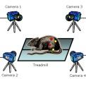 Kissei Kinema Tracer 3D 动物步态分析系统