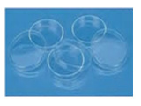 细菌培养皿