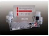 裸鼠克拉拉细胞蛋白(CC16)ELISA试剂盒
