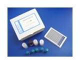 大鼠细胞间粘附分子1(ICAM-1/CD54)ELISA试剂盒