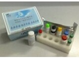 大鼠骨成型蛋白受体1A(BMPR-1A)ELISA试剂盒