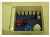 仓鼠基质金属蛋白酶9/明胶酶B(MMP-9/Gelatinase B)ELISA试剂盒