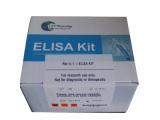 羊结缔组织生长因子(CTGF)检测试剂盒