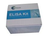 猴白介素9(IL9)检测试剂盒