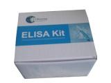 猴红细胞生成素(EPO)检测试剂盒
