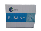 羊促肾上腺皮质激素(ACTH)检测试剂盒