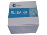 羊干扰素γ(IFNγ)检测试剂盒