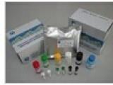 马胰岛素样生长因子结合蛋白6(IGFBP6)检测试剂盒