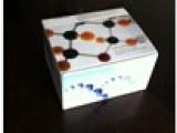 人成纤维细胞生长因子12(FGF12)检测试剂盒