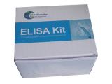 羊免疫球蛋白G(IgG)检测试剂盒