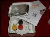 鸡窖蛋白(CAV1)检测试剂盒