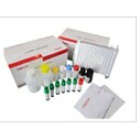 人成纤维细胞生长因子11(FGF11)检测试剂盒