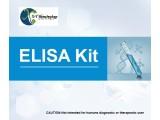 小鼠脱氧核糖核酸酶Ⅰ(DNASE1)检测试剂盒