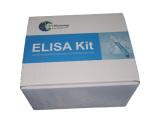 绵羊白介素4(IL4)检测试剂盒
