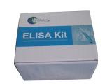 猴白介素4(IL4)检测试剂盒