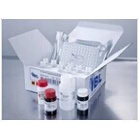 小鼠兴奋性氨基酸转运蛋白2(EAAT2)检测试剂盒