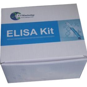 小鼠神经肽FF(NPFF)检测试剂盒
