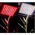 FluorCam樣帶掃描式葉綠素熒光成像系統