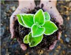 土壤污染防治法解读