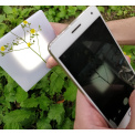 萬深SC-K1型自動原位活體植物分枝角測量儀