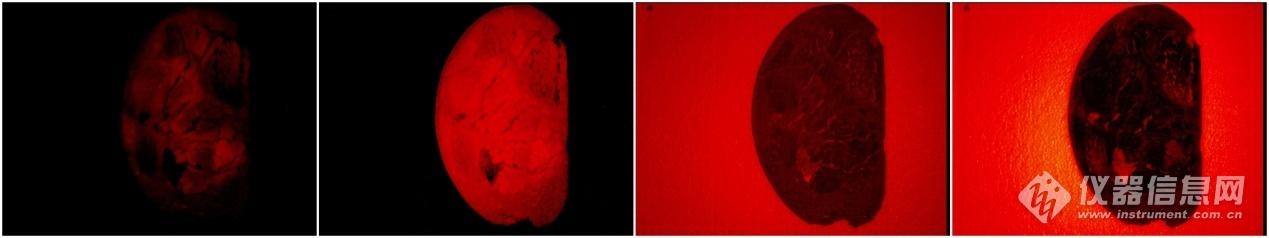 牛肉在多波长组合下的近红外图像.jpg