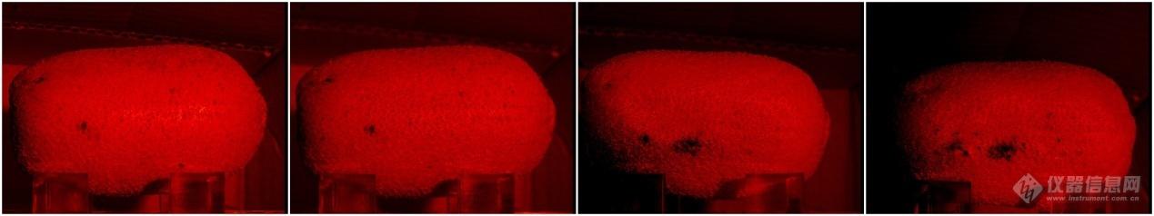 猕猴桃贮藏期间内部病变发展近红外图像.jpg