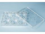 海狸TCT表面处理细胞培养板40106六孔板
