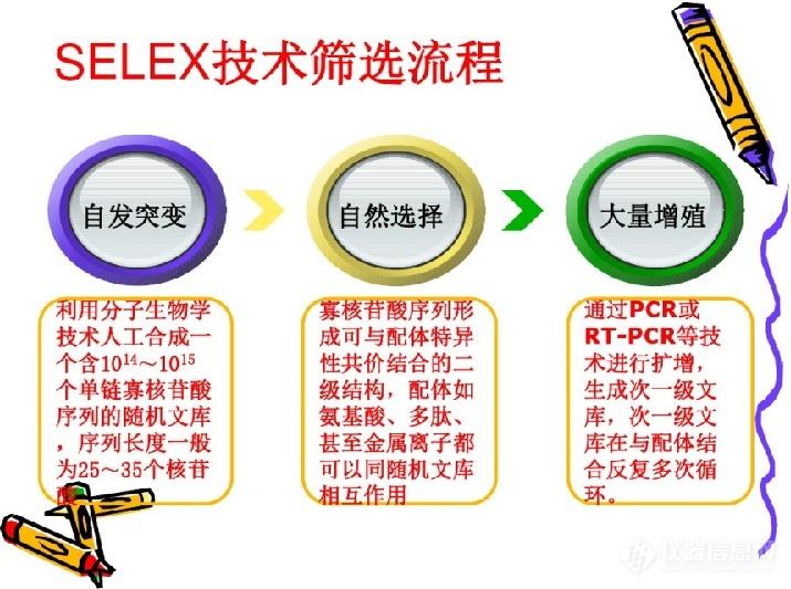 SELEX.png