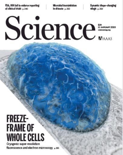 Science封面  冷冻超分辨与FIB-SEM结合新技术:三维蛋白超微结构可视化