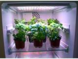 植物生长箱